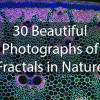 30-beautiful-photographs-fractals-nature