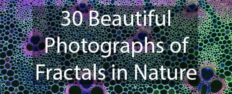 30-beautiful-photographs-fractals-nature